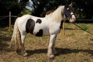 Horse Cruelty South West Dublin