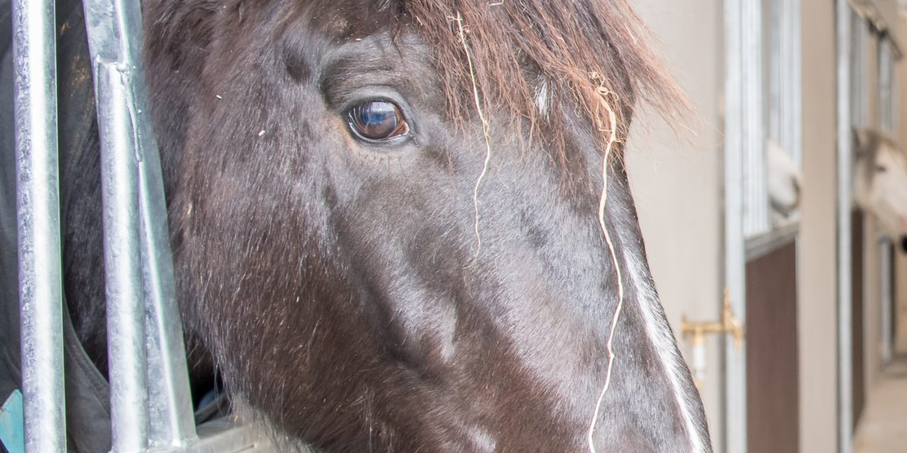 Fettercairn Horse Aware Week