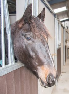 Fettercairn Tallaght Horse Aware Week