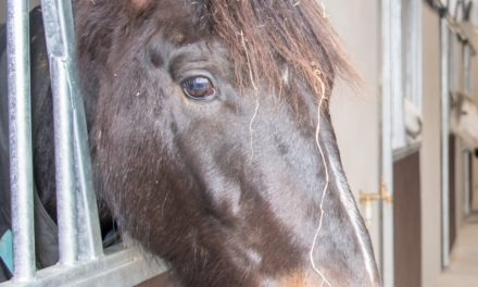 Fettercairn Horse Aware Week