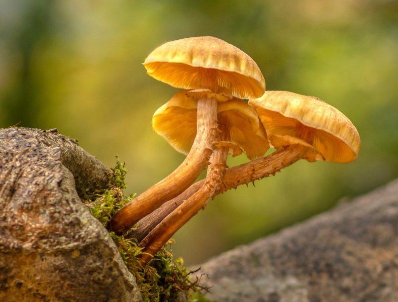 Fungi Patrick Kavanagh