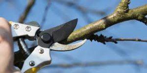Tree Pruning Causing Concern ClondalkinRathfarnham