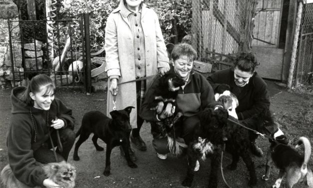 Getting Nostalgic With Newsgroup – Animal Aid Clondalkin 1995