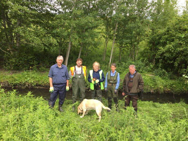 Dodder Action Group Clean Up