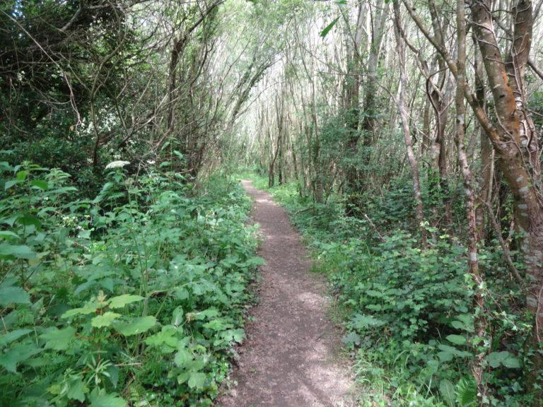 Rathcoole-Woodland