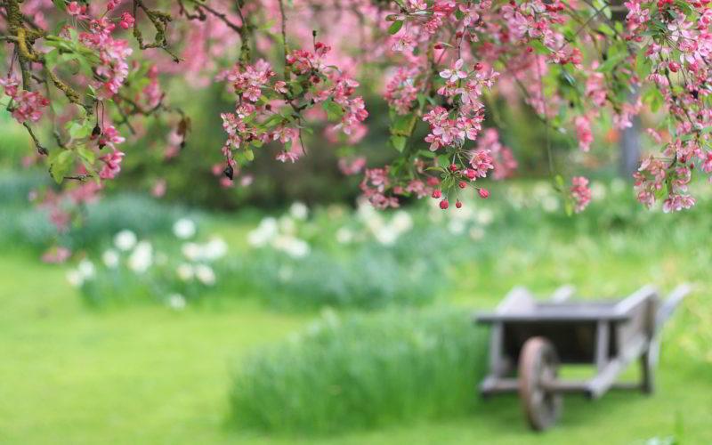 Top Tips Garden Newsgroup APCO