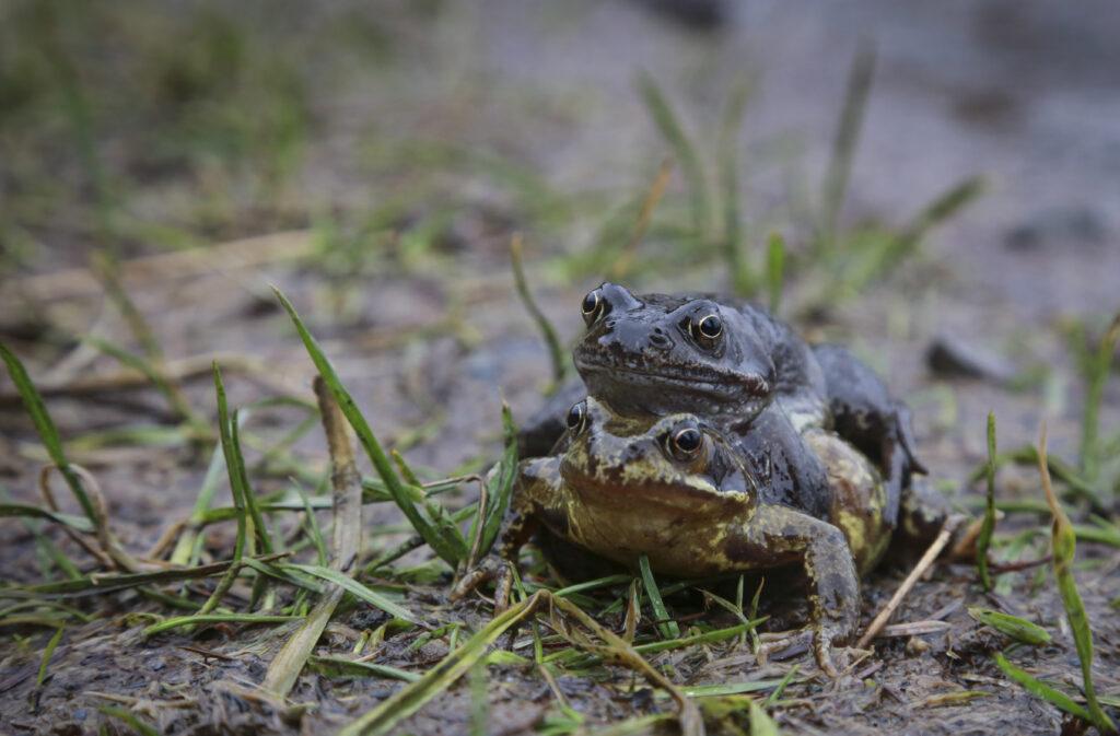 Frog Hell Fire Club Karen Morgan