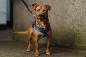 Dogs Trust Fran Veale