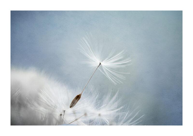 Palmerstown Noleen Kavanagh Fragile Wish