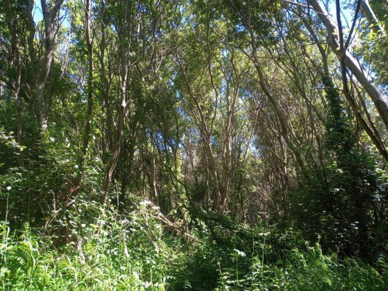 Rathcoole Woodlands